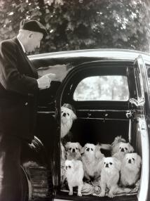 The-MARQUIS-de-CUEVAS'S-dogs-BOIS-de-BOULOGNE-by-DOISNEAU-Circa-1953