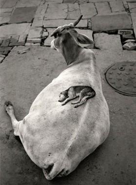© Pentti Sammallahti. India (1999)