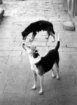 © Pentti Sammallahti Swayambhunath, Nepal (1994)