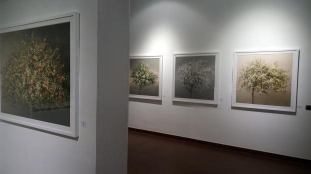 Tree - Irene Kung (3)